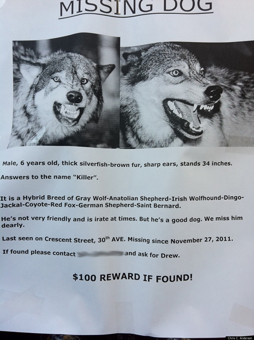 Funny Lost Dog Flyer
