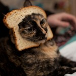 Breaded Cat