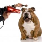 Pet Grooming Marketing