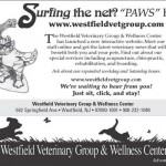 Healthy Veterinarian Marketing Strategy Using Print Materials