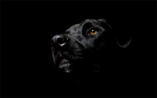 dog dark wallpaper