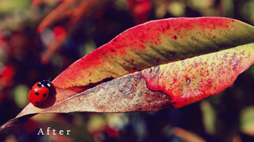 photoshop action nature colors