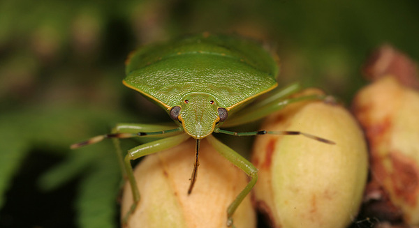insectuality 8