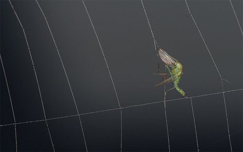 insectuality 9