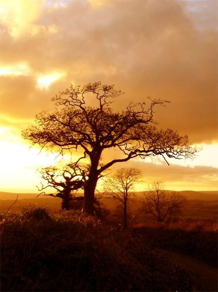 Silhouette Photos - Landscape