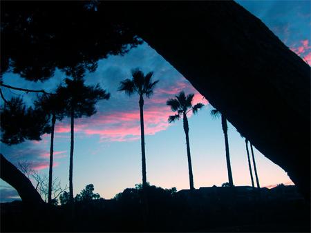 Silhouette Photos - Palm Silhouette
