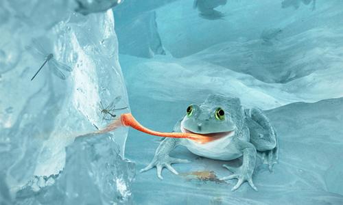 snow frog