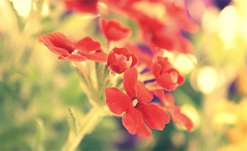 flower/bokeh