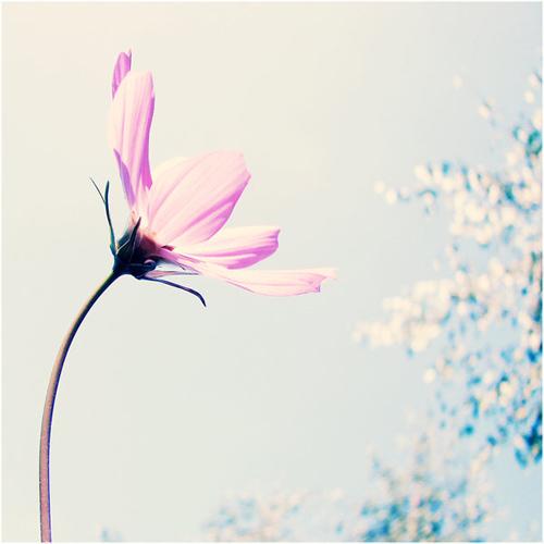 ona flower