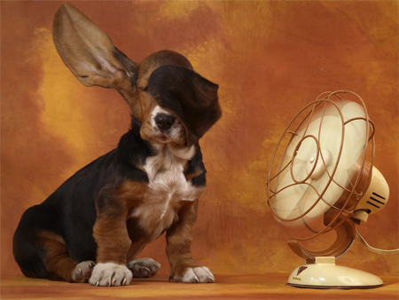 The Basset Hound and the Breeze