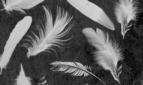 Feathers Brushes Set 1
