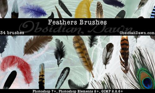 Feathers Photoshop Brushes