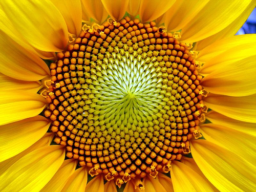patterns-in-nature-26