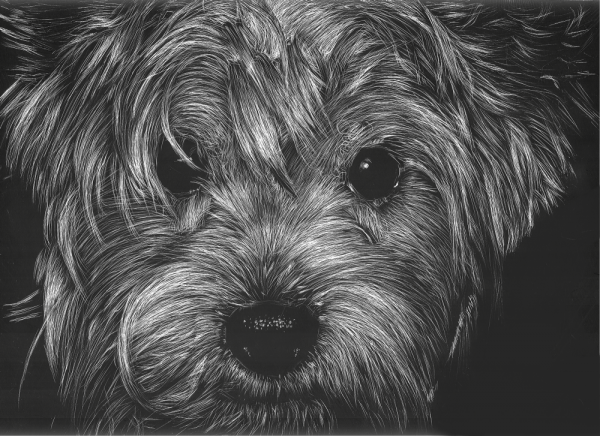 scratchboard-illustration-29