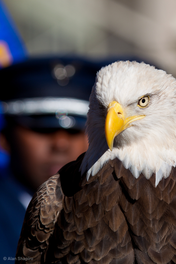 Veterans-Day-Pictures-22