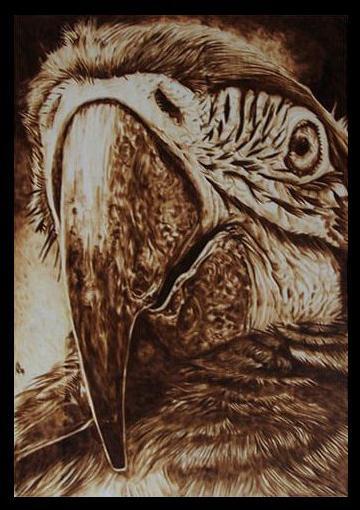 """Parrot"" - pyrography by Davide Della Noce"