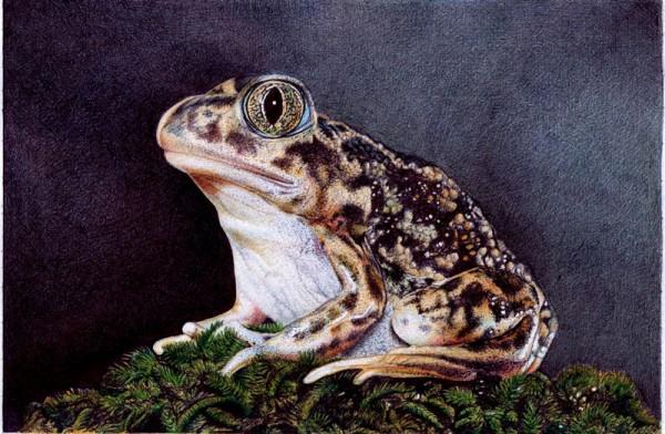 """Sitting Toad"" - Ballpoint Pen Artwork by Samuel Silva"