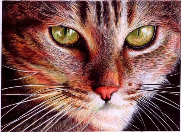 """Cat face"" - Ballpoint Pen Artwork by Samuel Silva"