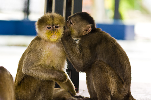 monkey-whisper