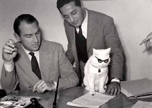 Corporate Animals - The Pros and Cons of Workplace Pets - Cats