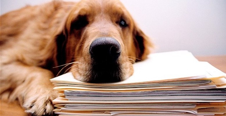 Corporate Animals - The Pros and Cons of Workplace Pets - Dog
