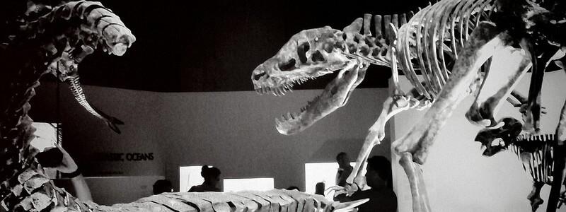 Dinosaur Bones by e_walk via photopin cc