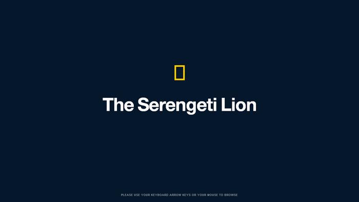 National Geographic | Serengeti Lion