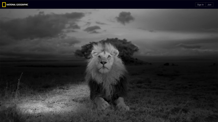 The Serengeti Lion | National Geographic