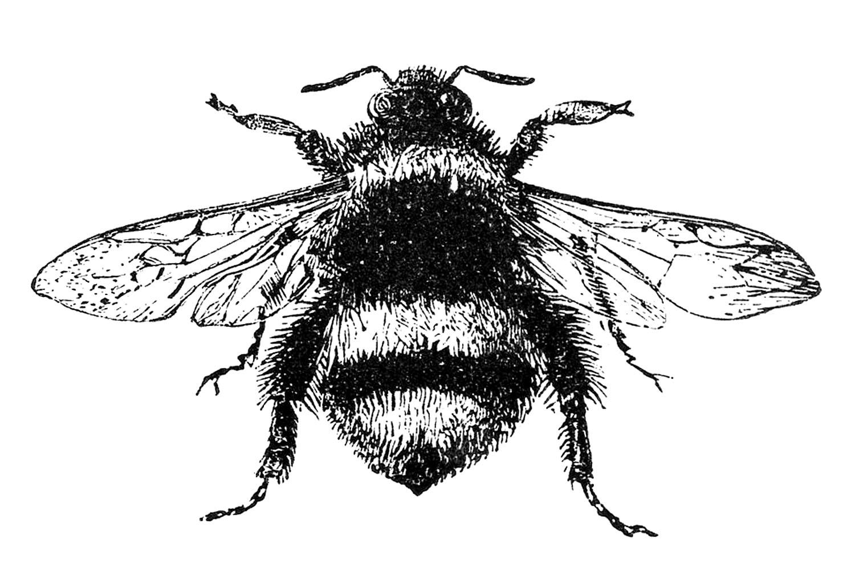 Free-Stock-Image-Bumblebee-GraphicsFairy
