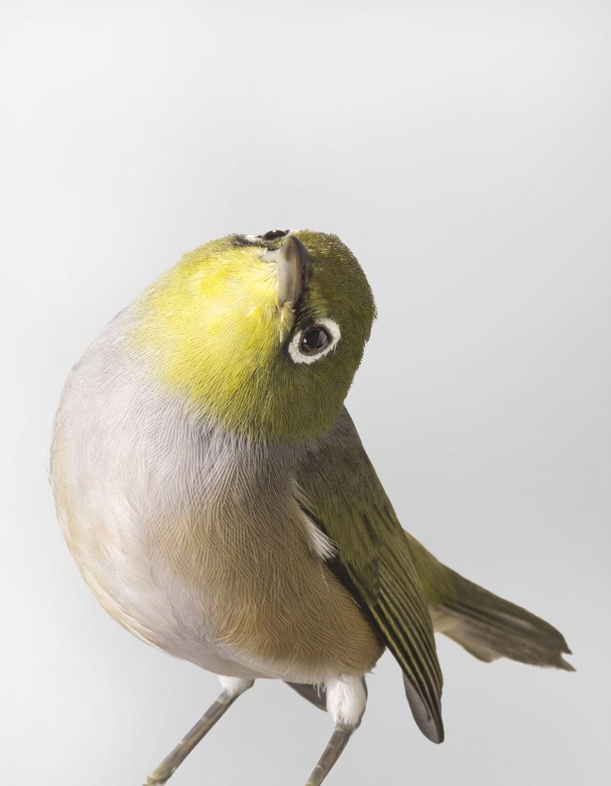Portraits-Animals-Birds-Leila-Jeffreys-A