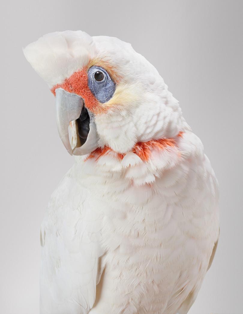 Portraits-Animals-Birds-Leila-Jeffreys-Jarra