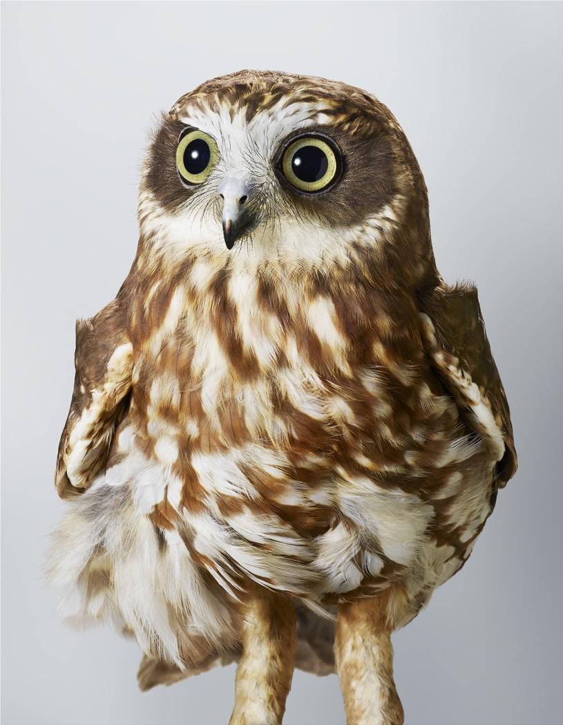 Portraits-Animals-Birds-Leila-Jeffreys-Pepper