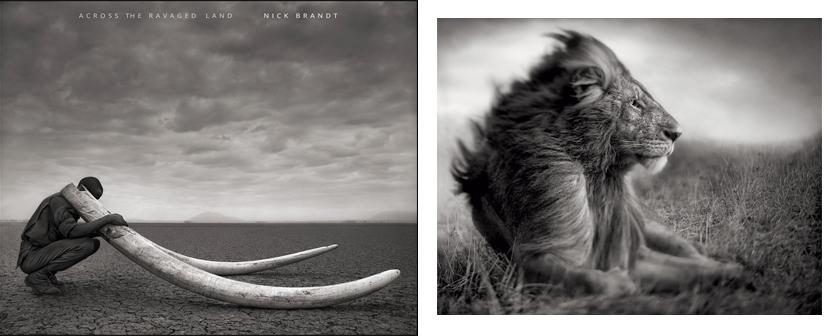 Photography-Books-Nick-Brandt-001
