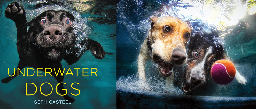 Photography-Books-Underwater-Dogs-001