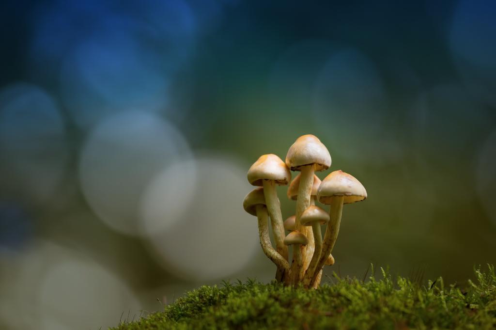 Anke Kneifel-mushroom-11