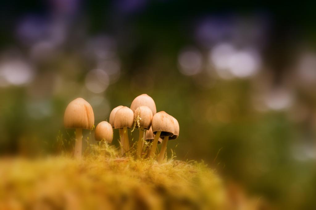 Anke Kneifel-mushroom-14