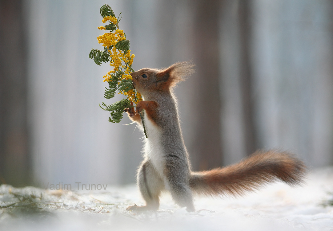 photographer captures cute squirrels in a photo shoot
