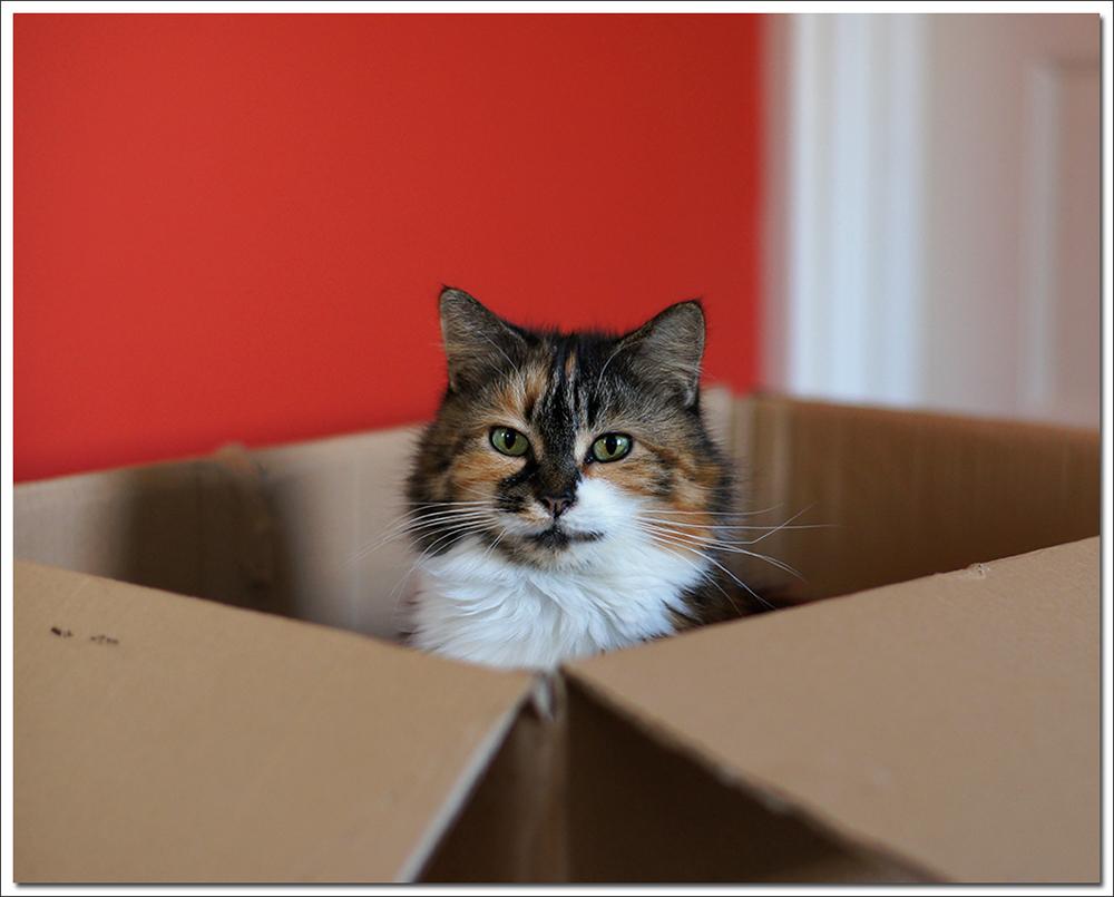 cat peeking outside the box